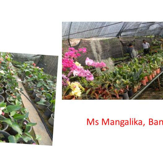 Cut Flower and Foliage Farm