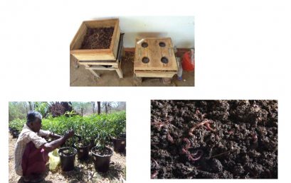 Toxic free vegetable cultivation: producing vermi-composting, Bio char and wood vinegar